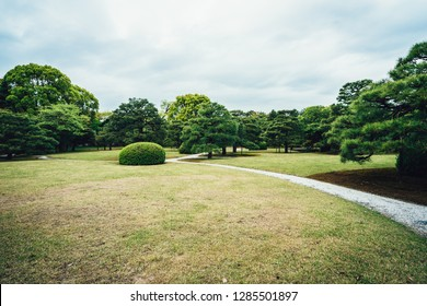 Meadow scenery landscape with blue sky concept in spring. Smooth green grass lawn trees with supporting and shrub in a good maintenance gray curve pattern walkway. beautiful nature forest park japan.
