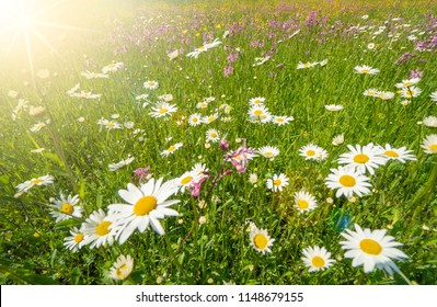 meadow with spring flowers and sunbeams