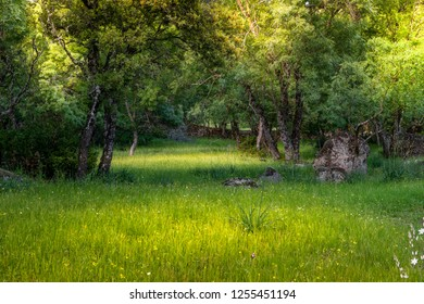 Meadow in spring with high grass and daisies