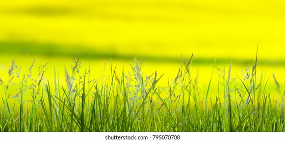 meadow in springtime