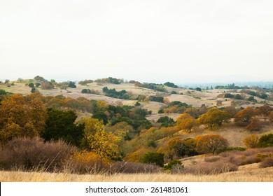 Meadow in Stanford Dish Palo Alto California