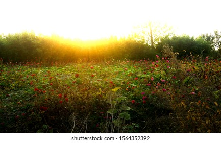 Meadow with Sun Gleaming Through Trees
