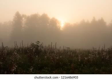 Meadow sunrise at foggy morning landscape