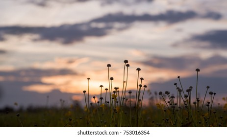 meadow with sunset background