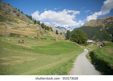 Meadow in the swiss Alps, Zermatt