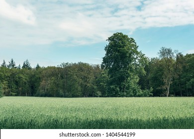 Meadow with tall grass near forest under cloudy sky.