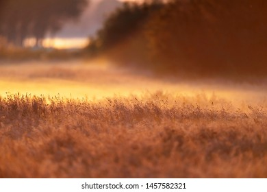 Meadow with tall grasses in mist at dawn.