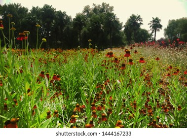 Meadow and trees in botanical garden