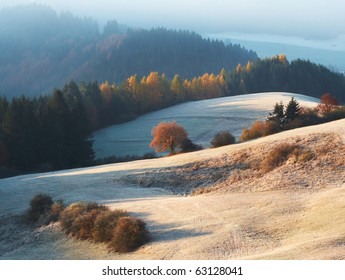 meadow, trees, first snow and light