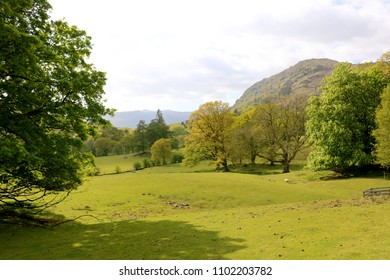 A meadow, trees and hills in the countryside in the Lake District in Cumbria