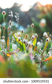 Meadow wild flowers in field. Bright colors
