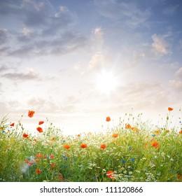 a meadow of wild flowers under beautiful sundown