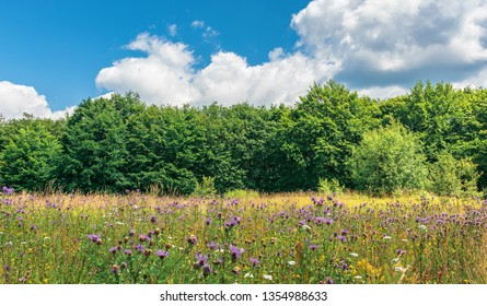 meadow with wild herbs on the forest edge. wonderful summer weather at high noon