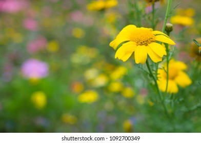 meadow with yellow flower