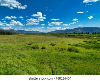 Meadow in Yellowstone National Park, USA