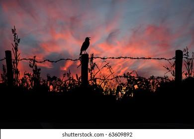 Meadowlark Sings In the Morning Sunrise