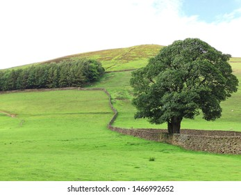 Meadows with dry stone wall, beginning of Pennine Way, Edale, Hope Valley, Derbyshire, Peak District