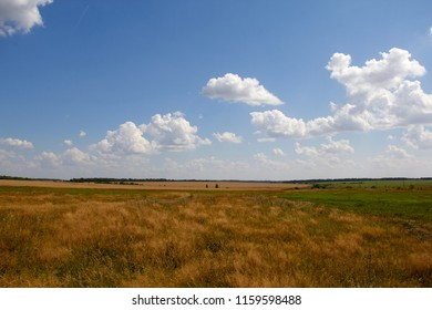 meadows and fields near the Ryazan in the summer