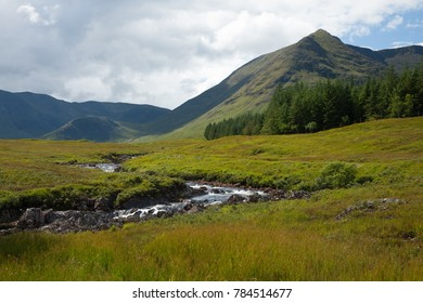 Meadows in the Highlands, Scotland