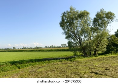 meadows and maize in Adda park near Abbadia Cerreto, country landscape with fields and trees in the agricultural plains of park in Lombardy, shot in summertime with green vegetation