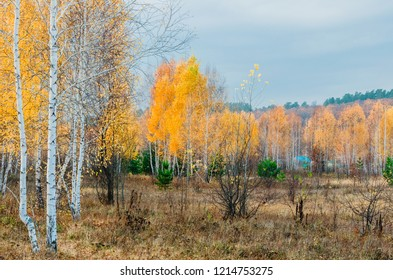 meadows near lakes in the floodplain of the Volga river in its middle reaches in autumn, typical landscapes of temperate continental climate