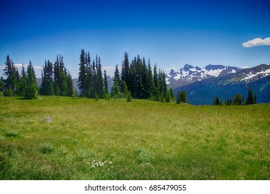 Meadows of wildflowers on the east slopes of Mount Rainier near Sunrise, National Park, Washington