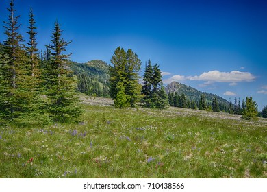 Meadows of wildflowers on the east slopes of Mount Rainier near Sunrise, National Park, Washington