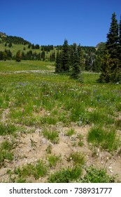 Meadows of wildflowers on the east slopes of Mount Rainier near Sunrise,