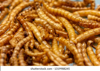 Mealworms (Tenebrio molitor), freeze-dried