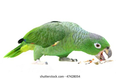 Parrot Eating Images Stock Photos Amp Vectors Shutterstock
