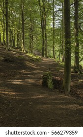 Meandering path through forest bordering Ladybower Reservoir in Derbyshire, England in late Summer.