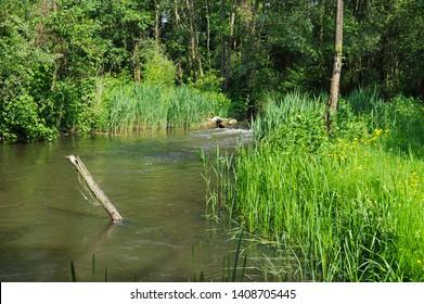 meandering river Beerze in Kampina nature reserve near Boxtel, Netherlands