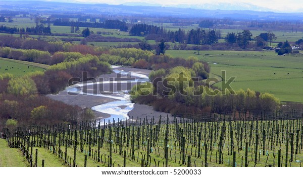 A meandering river   with rows of grapes in the foreground
