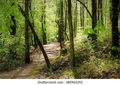 Meandering trail through dense forest near the Jeff Busby Campground on the Natchez Trace.