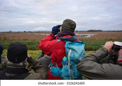 Meare, Somerset / England - December 4 2017: Bird watchers with binoculars from behind,  looking out over the Ham Wall wetlands nature reserve waiting for the starling murmuration in winter