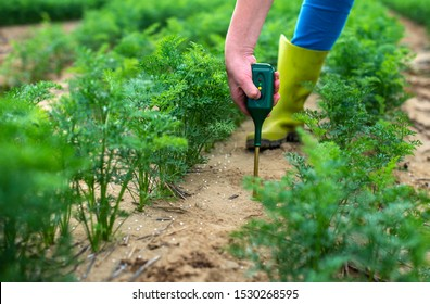 Measure soil with digital device. Green plants and woman farmer measure PH and moisture in the soil. High technology agriculture concept.