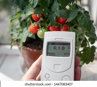Measurement of radiation background. Cherry tomato bush, Geiger counter dosimeter in hand.