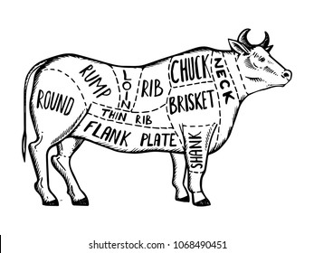 beef cuts images  stock photos  u0026 vectors