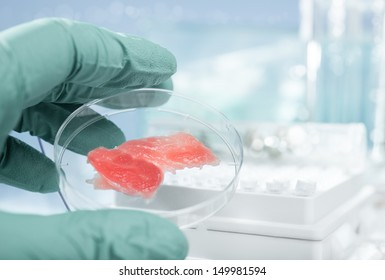 Meat grown up in laboratory conditions in a plastic dish
