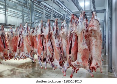 meat industry,meats hanging in the cold store