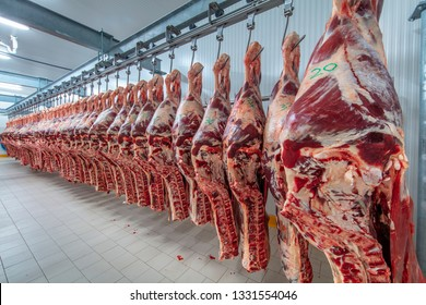 Meat industry,meats hanging in the cold store. Cattles cut and hanged on hook in a slaughterhouse. Halal cutting.