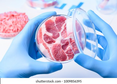 Meat sample in open laboratory Petri dish. Animal cell cultured clean meat concept.