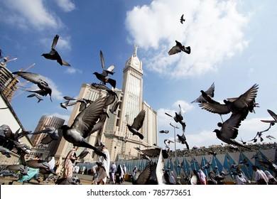 MECCA, SAUDI ARABIA: DEC13 , 2017 Skyline with Abraj Al Bait (Royal Clock Tower Makkah) in Mecca, Saudi Arabia with pigeons birds flying away.