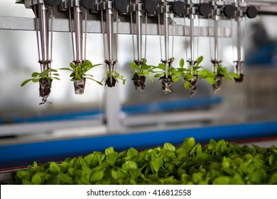 Mechanical planting seedlings.