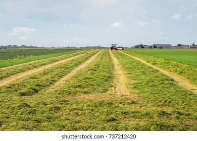 Mechanized cut and merged grass for silage storage purposes