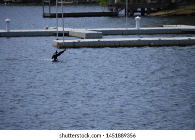 Medford, MA/USA-May 7, 2018: a cormorant slides in, ready to feast during the herring run near Mystic River Watershed, outside of Boston, MA.