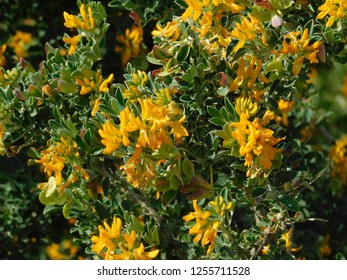 Alfalfa Bloom Images Stock Photos Vectors Shutterstock