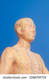 Medical acupuncture model of human