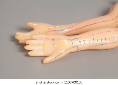 Medical acupuncture model of human hands