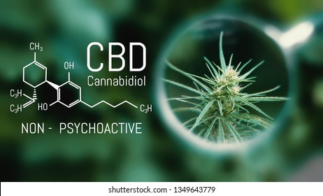 Medical Cannabis and Cannabidiol CBD Oil Chemical Formula. Growing Premium Marijuana products. Influence positive and negative of marijuana on human brain, nervous system, mental activity and function